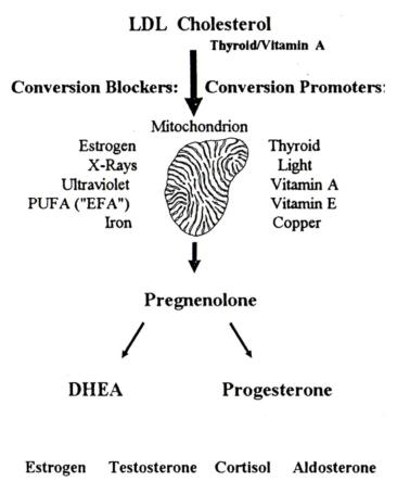 LDL, vitamin A, thyroid